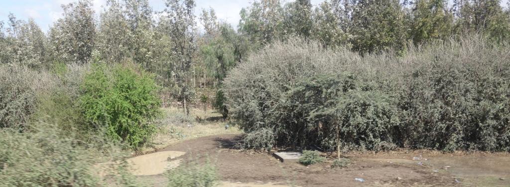 Growing Mnyaa