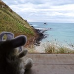Looking for yellowed eyed penguins on Otago Peninsula