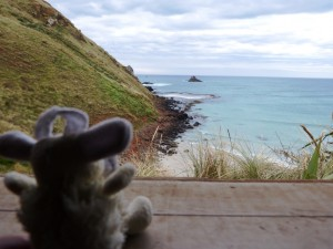 Looking for yellowed eyed penguins on Otago Peninsula