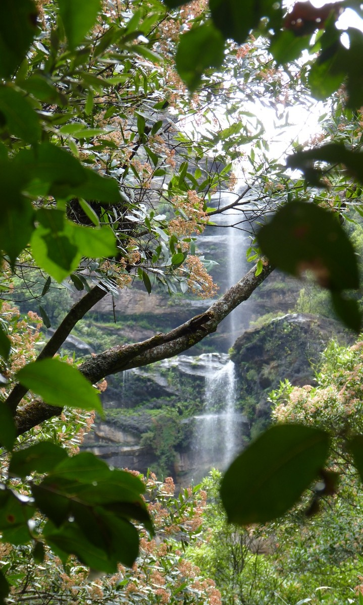 Scenic World Forest Walk