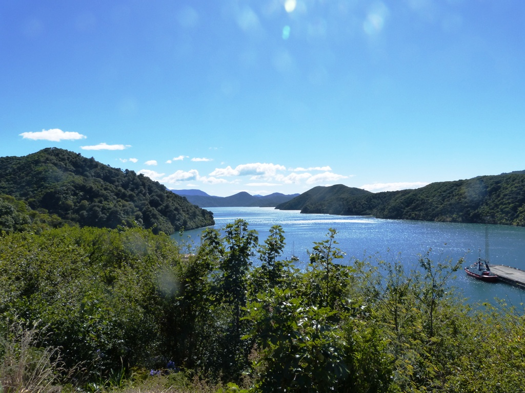 Queen Charlote drive in the Marlborough Sound