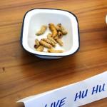 Live Hu Hu