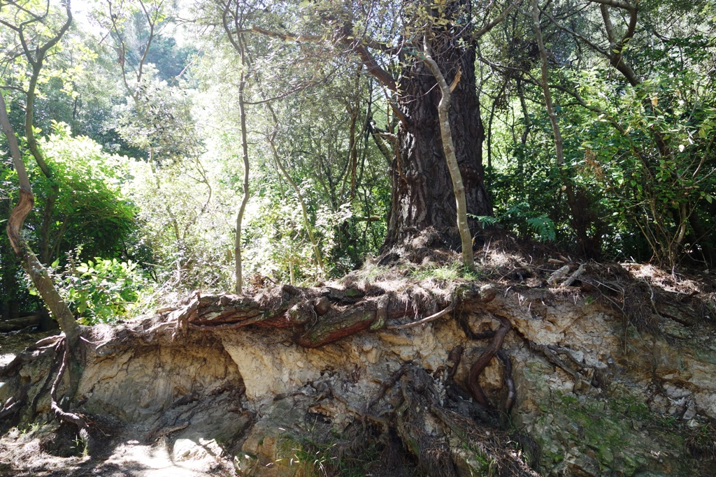 Wellington - Hobbiton Woods