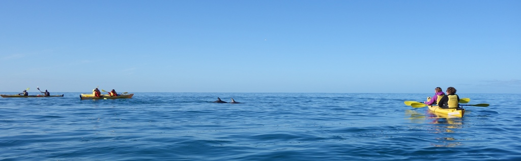 Small group of dolphins around our kayaks