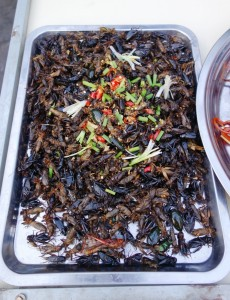 All sorts of fried bugs