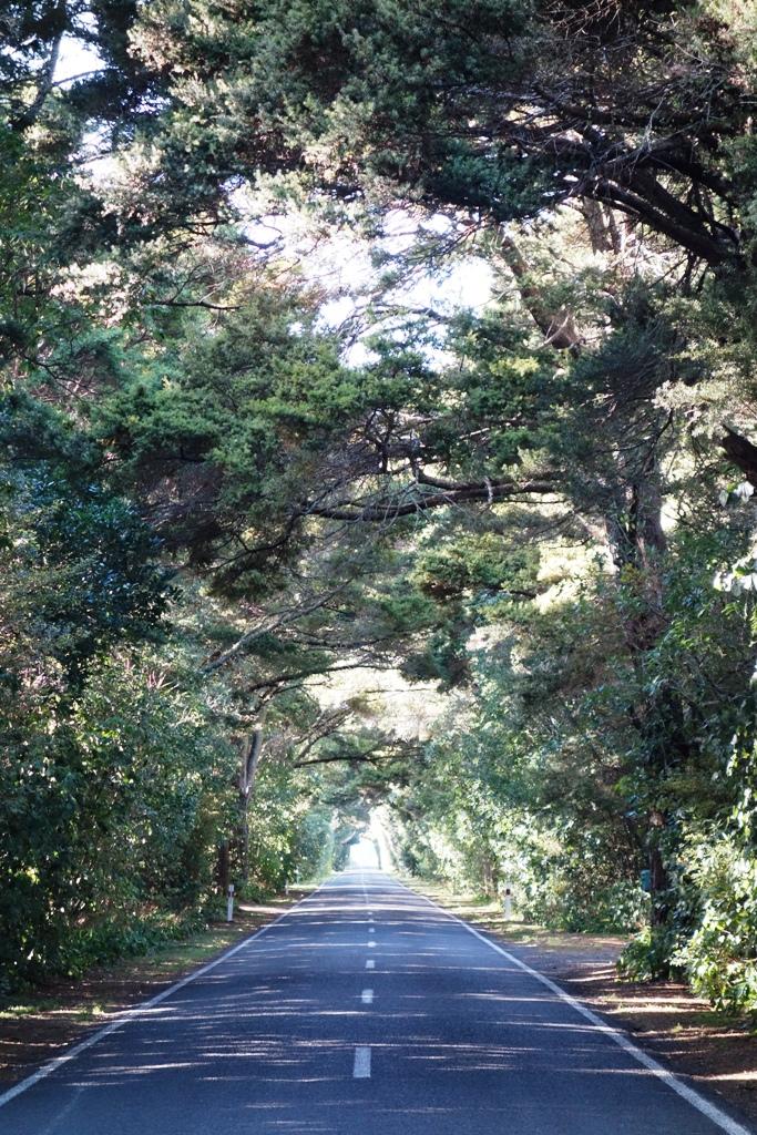 Otaki Gorge – Shire