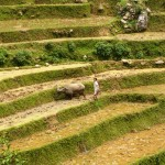 07. Rice terraces in Sapa Vietnam