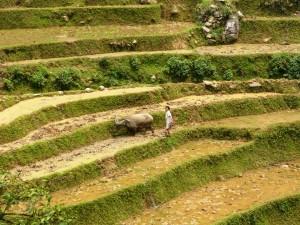 07. Rice terraces in Sapa Vietnam