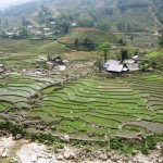 08. Rice terraces in Sapa Vietnam